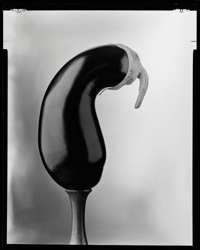 Analoge Fotografie, Schwarz-Weiß, Großformat, Aubergine